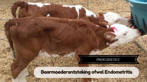 endometritis