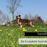De 6 leukste boerderij honden